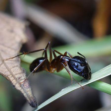 Kruipende insecten bestrijden - Plaagdierbestrijding Nederland - Uw specialist in preventie en bestrijding van kruipende insecten.