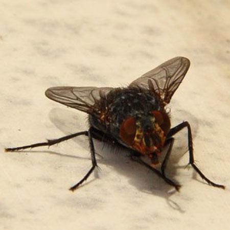 Vliegende insecten bestrijden - Plaagdierbestrijding Nederland - Uw specialist in preventie en bestrijding van vliegende insecten.